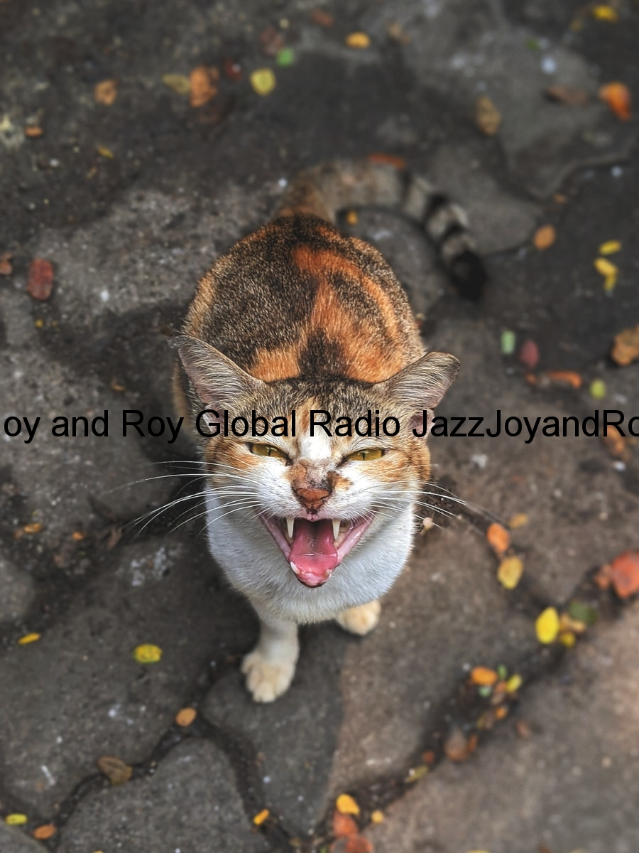 brown and white cat on black concrete floor